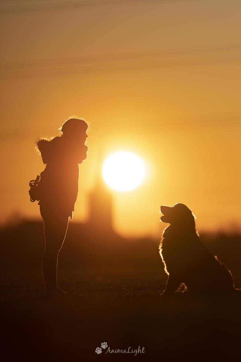 Photo sur coucher du soleil - Animalight