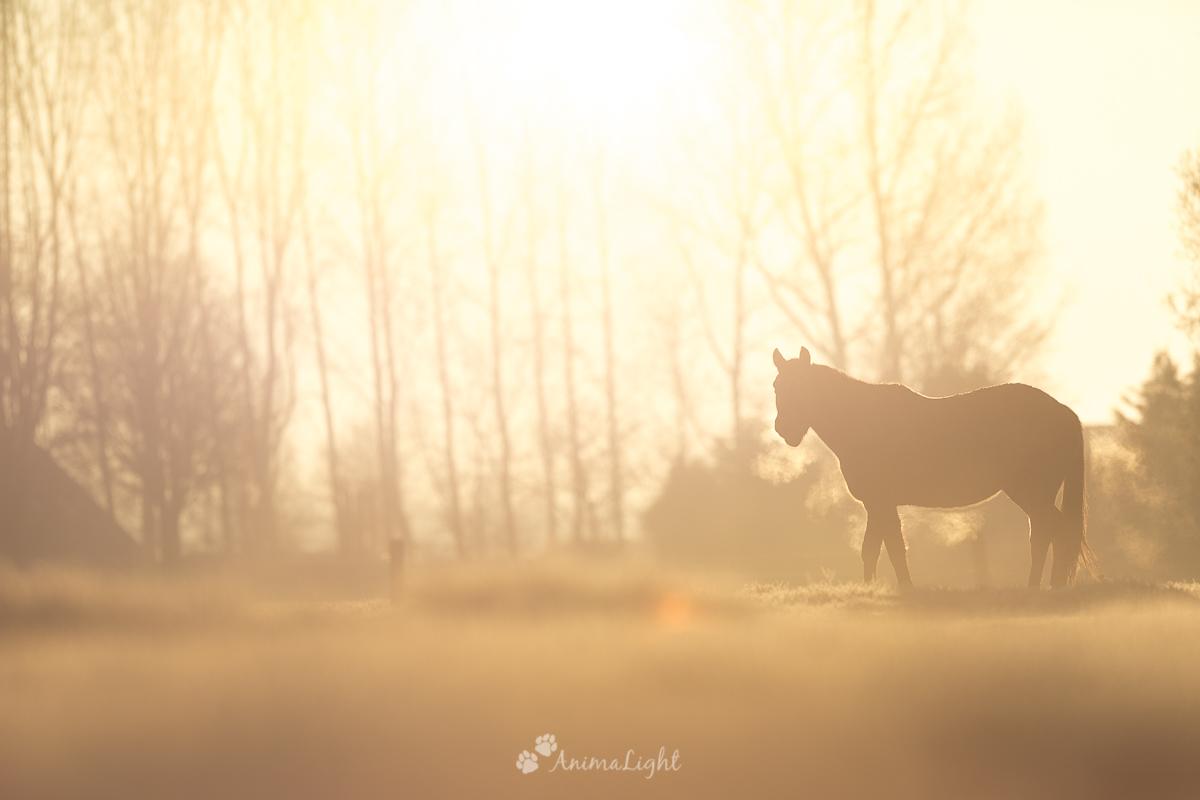Cheval, Mathias Léonard